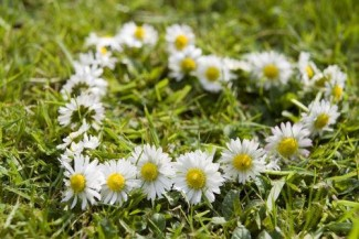 Links Daisy Chain